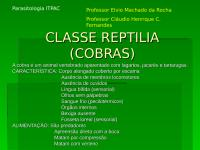 1_CLASSE REPTILIA (COBRAS).ppt